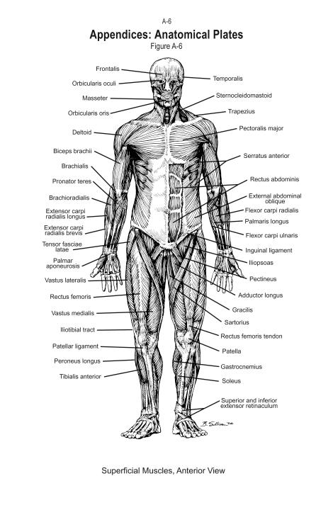 SOF-anatomical-plates_Page_06